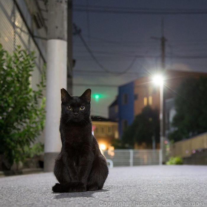 Чёрный котэ