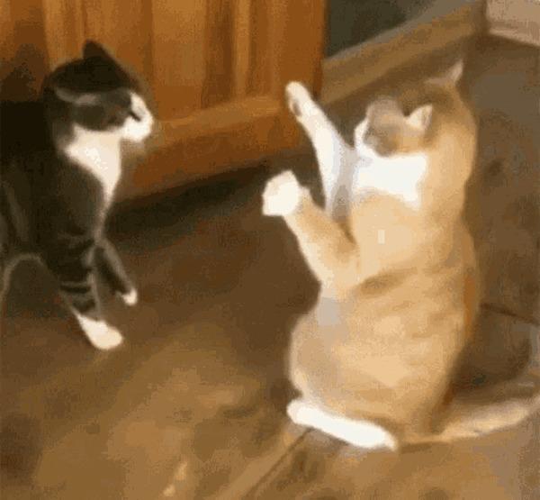 Интересные факты о кошках Кот, Тигр, Гифка, Интересное, Юмор, Факты, Длиннопост