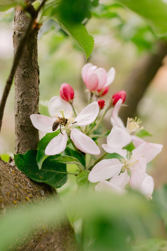 С весной