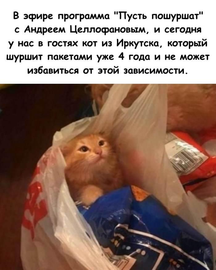 Ток шоу для котов