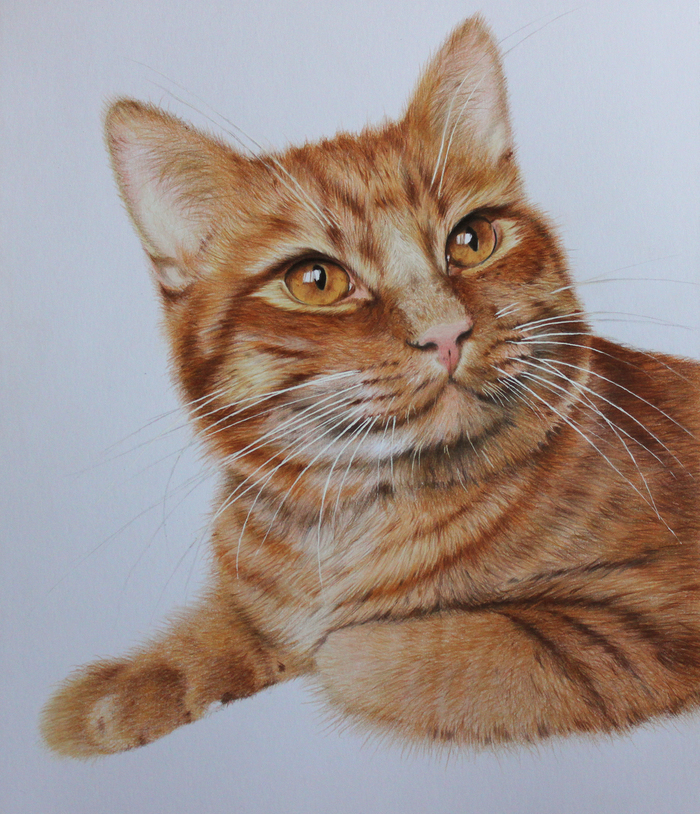Мой кот Рыжик. Рисунок цветными карандашами