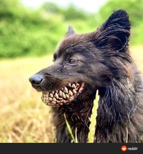 Просто собака с шишкой во рту