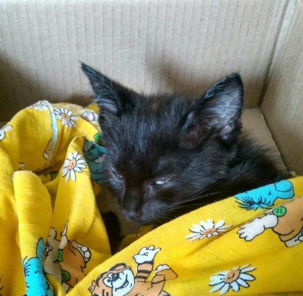 История спасения котёнка Яши, замурованного в подвале