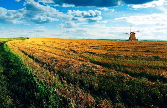 Изумрудного города нет, но есть изумрудная трава
