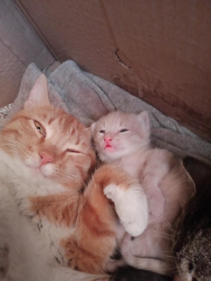 Котячий семейный портрет
