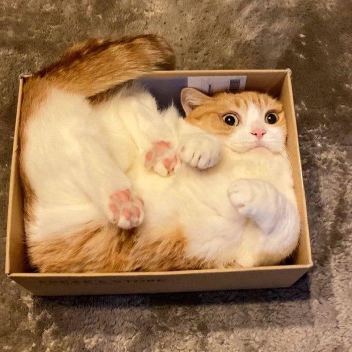Кубатура кота