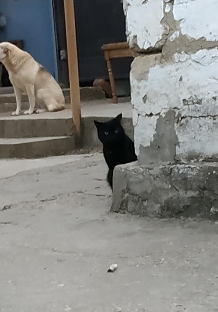 Кот-выглядун