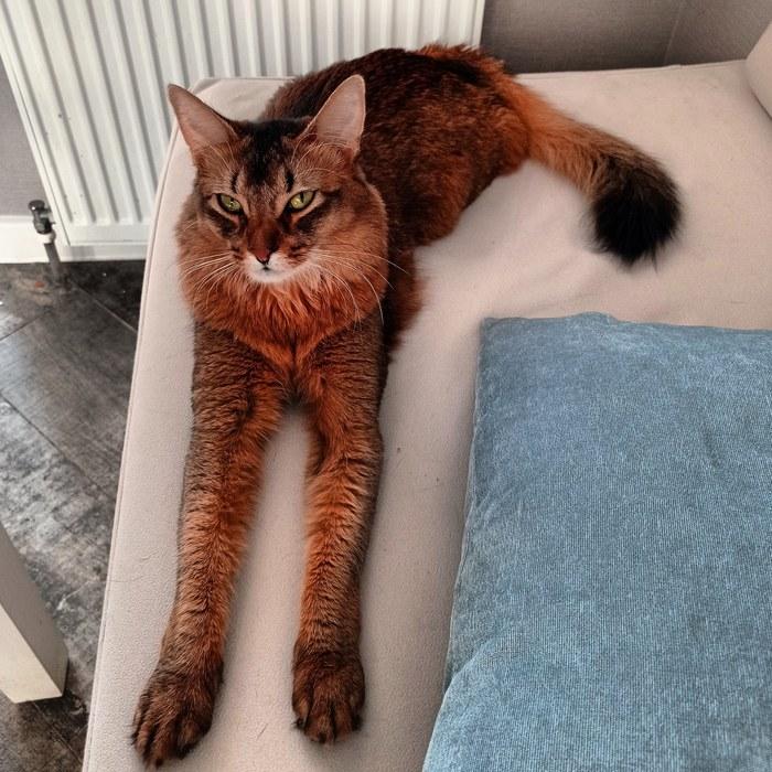 Я шерстяной котяра, как длинны мои лапищи