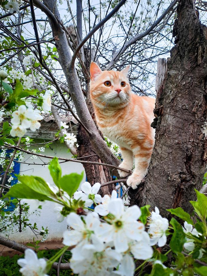Весенне-кошачье