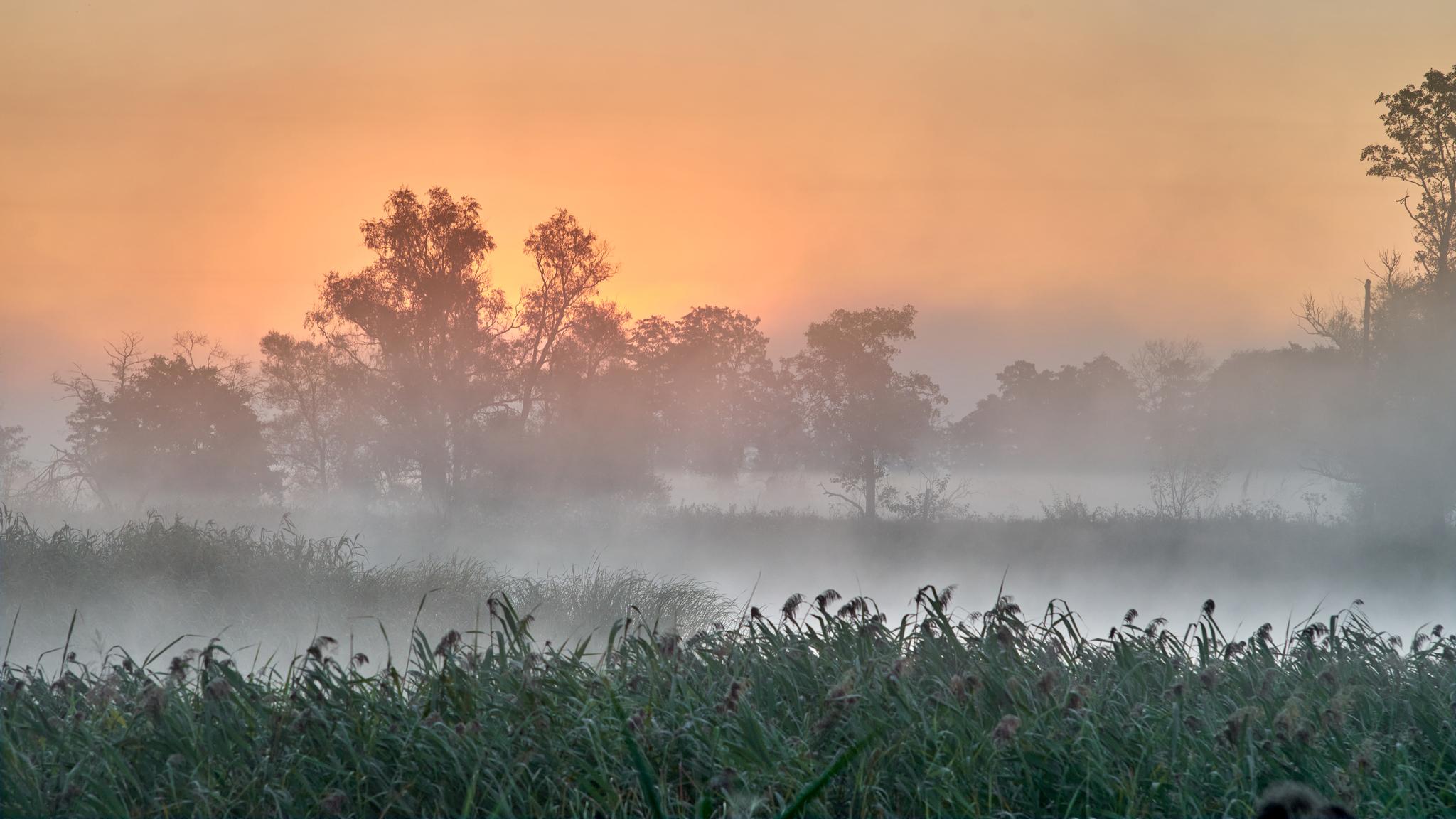 Обои восход, ёлки, утро. Природа foto 19